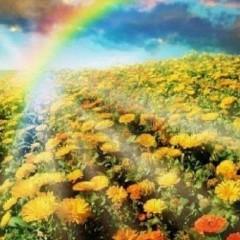 immagine natura con arcobaleno